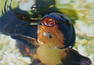 «L'étang est ma table» de Reiner Kunze extrait de l'entretien